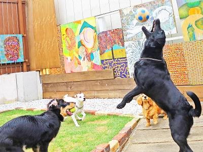 犬幼稚園11