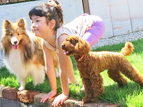 犬幼稚園3