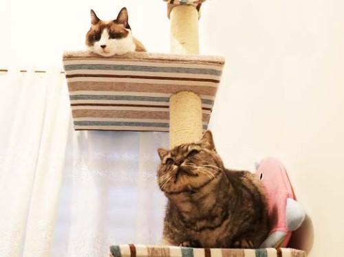 猫ホテル3