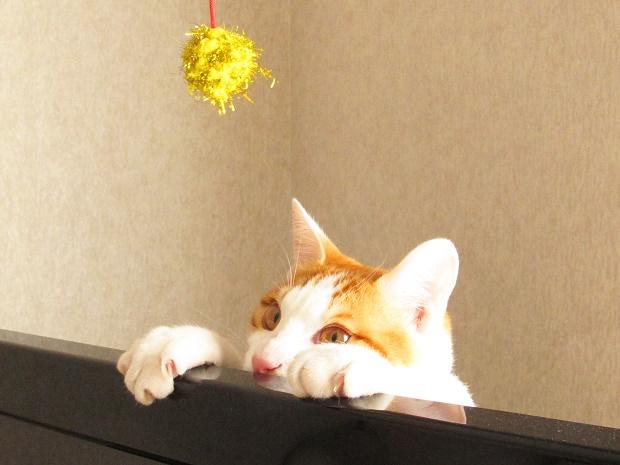 1猫シッティング
