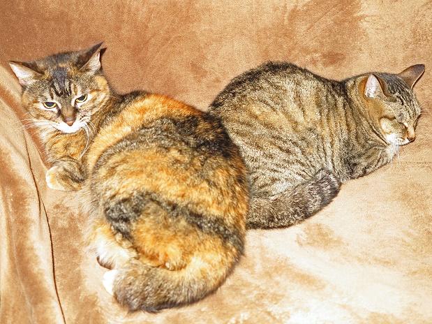 2猫シッティング